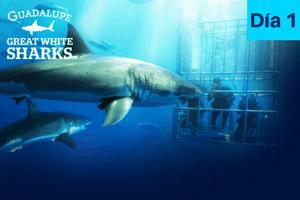 itinerario buceo tiburon blanco isla guadalupe dia 1