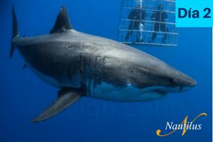 itinerario buceo tiburon blanco isla guadalupe dia 2