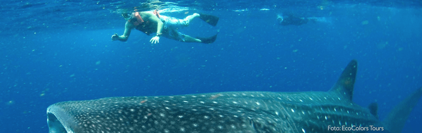 tiburon ballena mexico