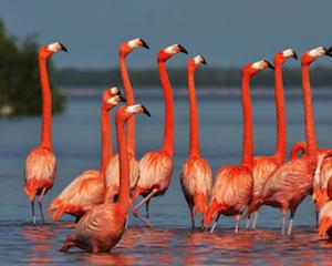 http://adventuremexico.travel/wp-content/uploads/2015/03/festival-de-aves-toh-yucatan-thumbnail-wpcf_300x240.png