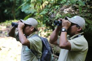 guias observacion aves regional san isidro lachiguxe oaxaca