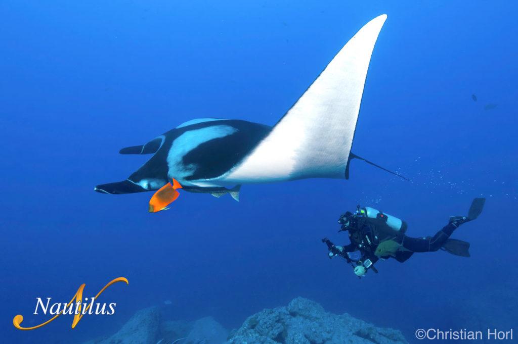 nautilus isla socorro manta gigantebuceo