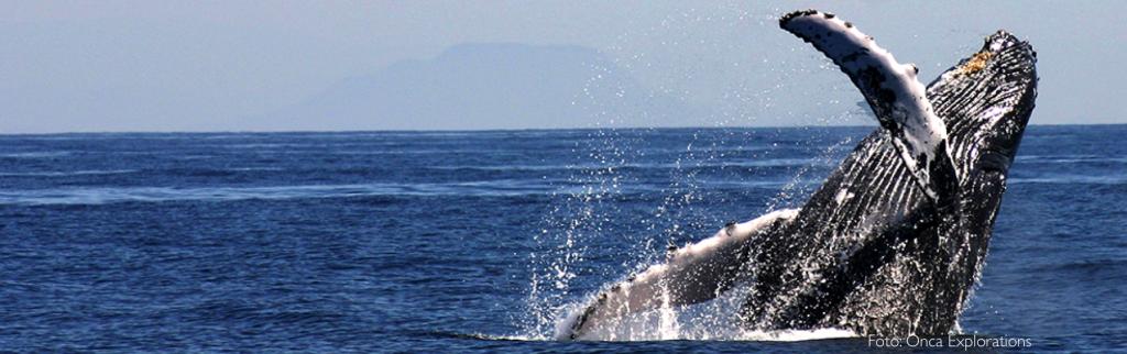 avistamiento de ballenas en mexico