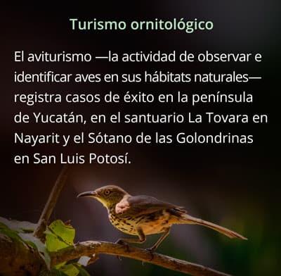 turismo ornitologico mexico